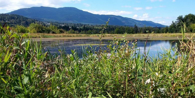 Buttertubs Marsh Nanaimo Pick Up Those Dogs